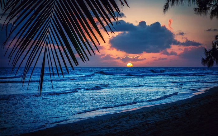 Wallpaper Caribbean Sea Beach Sunset Palm Trees Hd 5k: Playa, Noche, Puesta Del Sol, Nubes, Hojas, El Mar Caribe