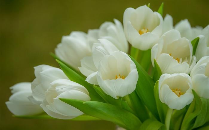 Hermosas Flores Blancas Wallpaper Hd Fondos De Pantalla Gratis: Tulipanes, Flores Blancas, Ramo HD Fondos De Pantalla