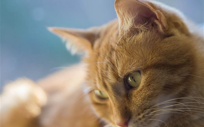 Los ojos amarillos gato cara hd fondos de pantalla animales los ojos amarillos gato cara fondos de pantalla imagen thecheapjerseys Images