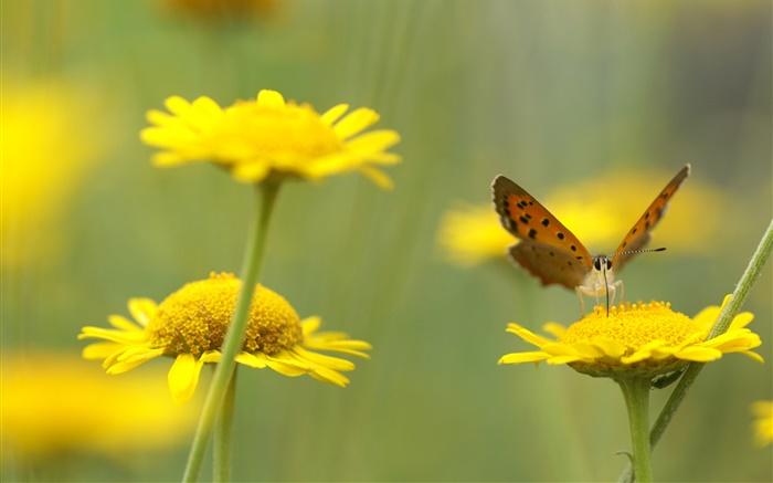 Flores Hermosas Flores Silvestres Fondos De Pantalla Gratis: Flores Silvestres Amarillas, Insecto, Mariposa HD Fondos